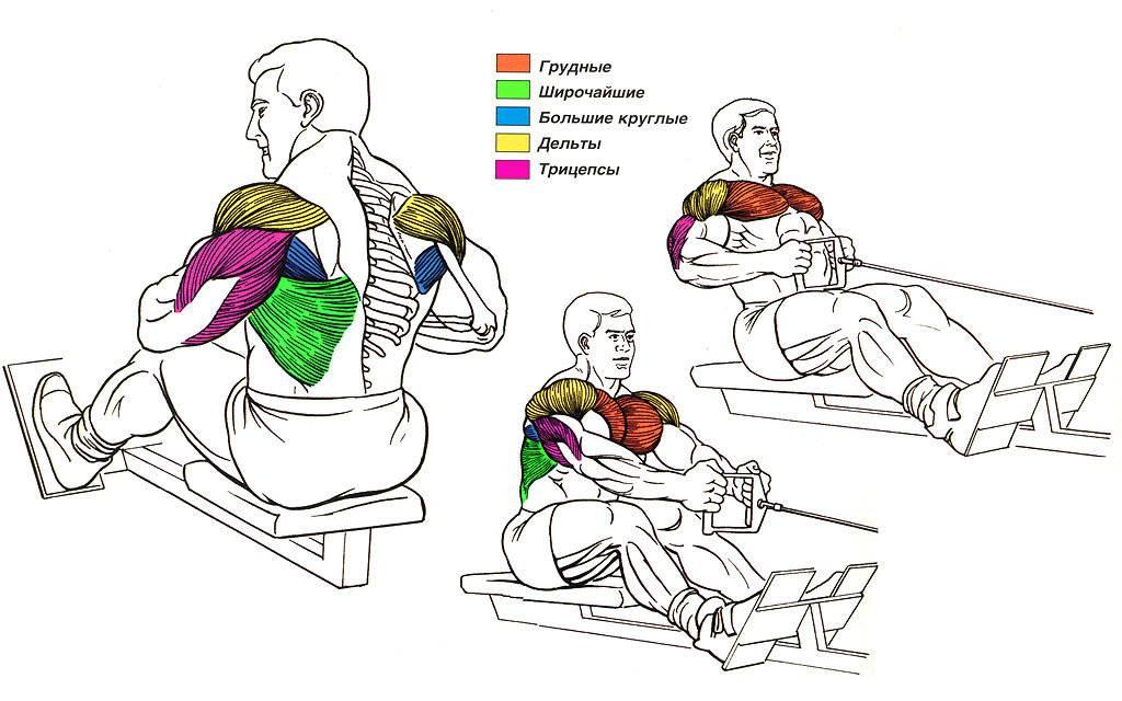 Т-тяга в тренажере: видео и фото упражнения