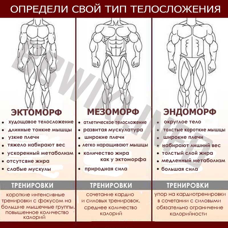 Программа тренировок для эктоморфа: комплекс упражнений и питание