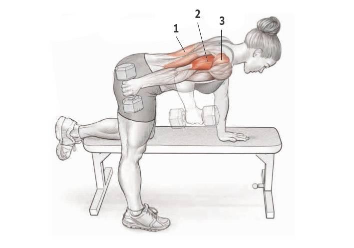 Разгибание рук в наклоне – универсальное изолирующее упражнение для трицепса