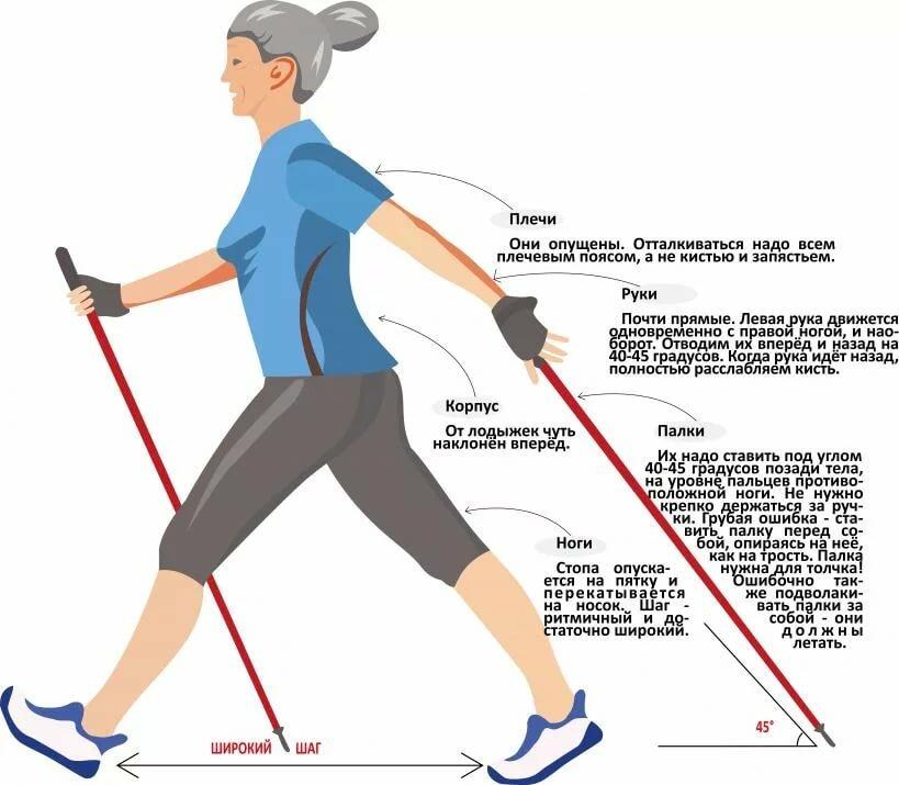 Техника скандинавской ходьбы - инструкция начинающему