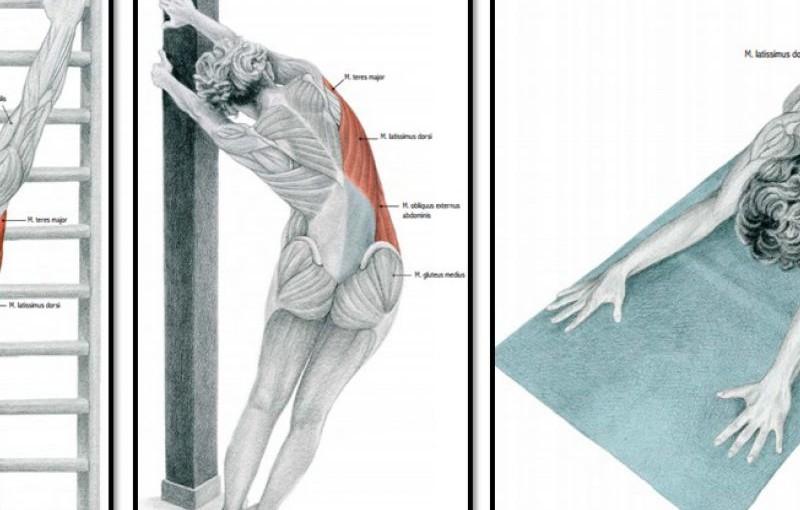 Упражнения для растяжки спины и позвоночника