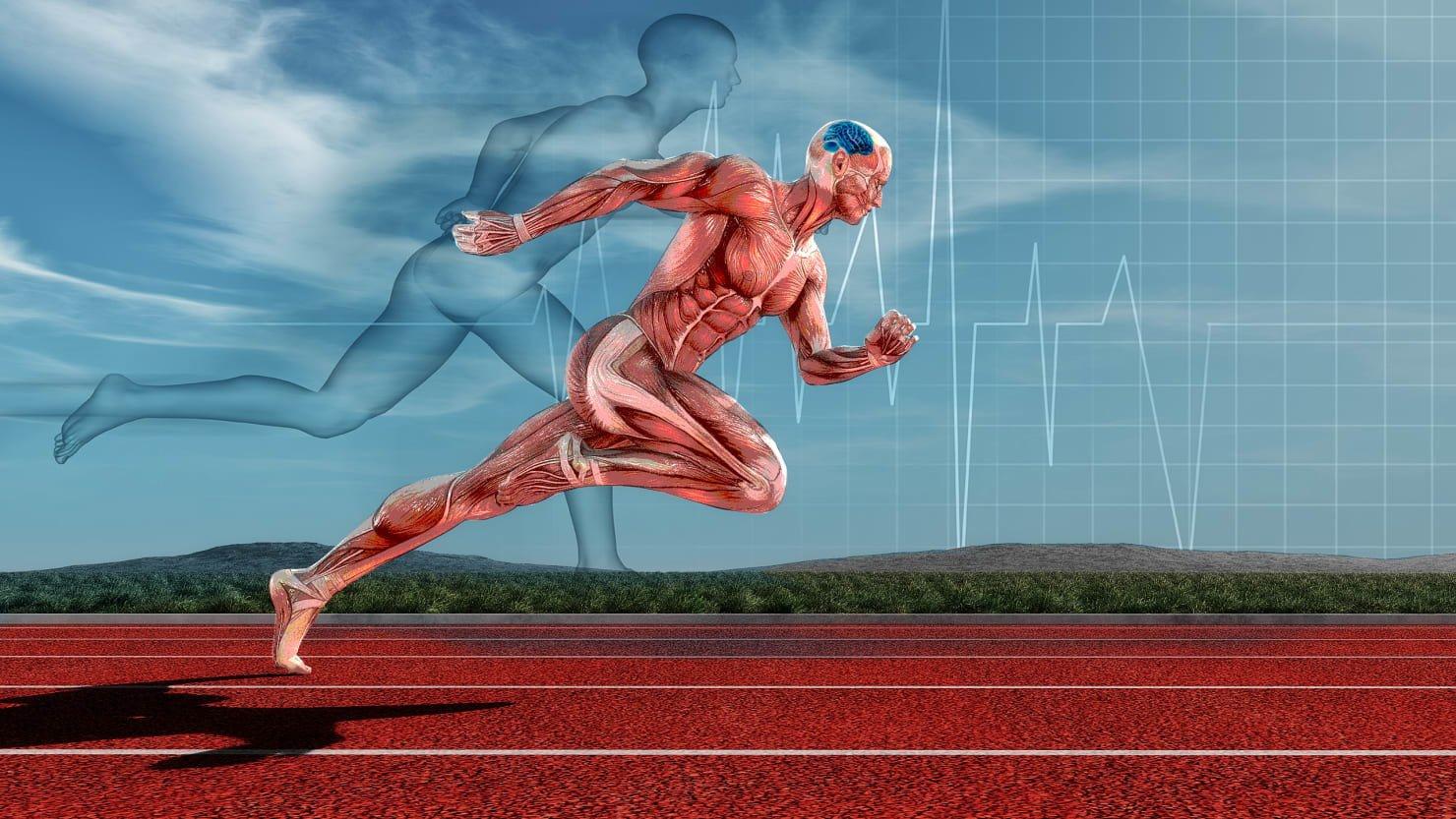 Эффект карпентера: мышечная память существует