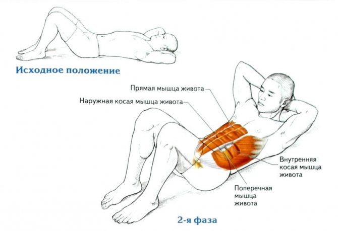 Как правильно делать скручивания на наклонной скамье? расскажем!