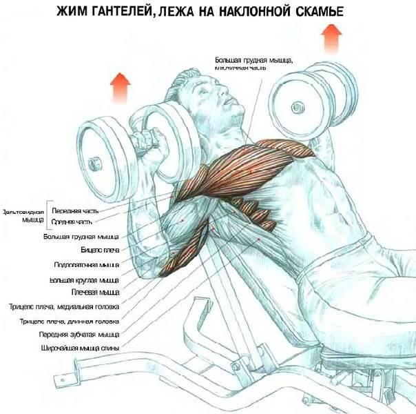 Жим штанги лежа на наклонной скамье вниз головой: ошибки и рекомендации — спорт и красота