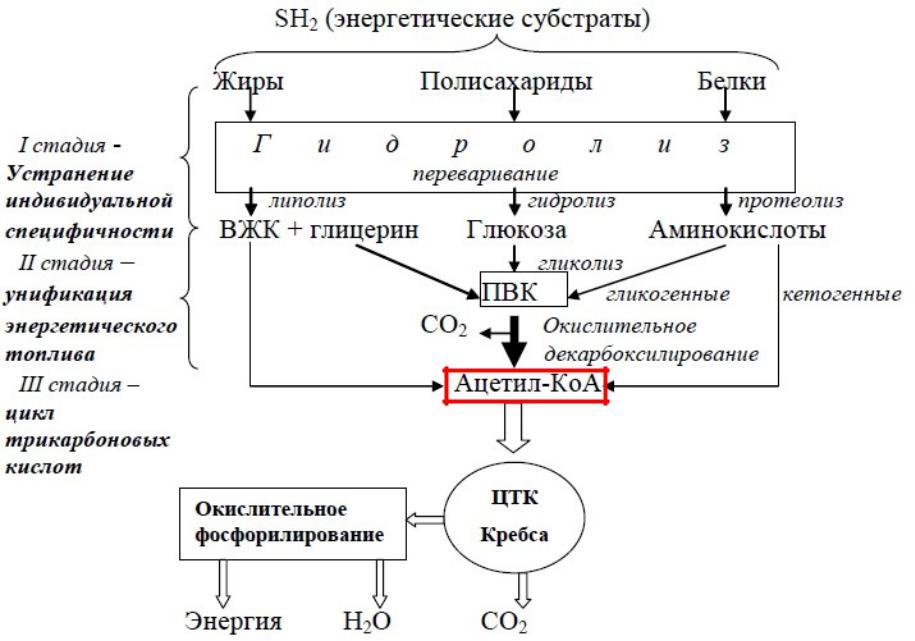 Анаболические и катаболические процессы