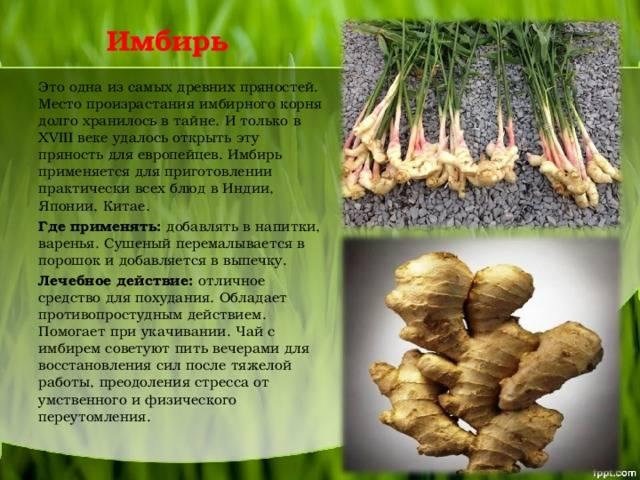 Корень имбиря - как употреблять в домашних условиях. полезные свойства и противопоказания корня имбиря