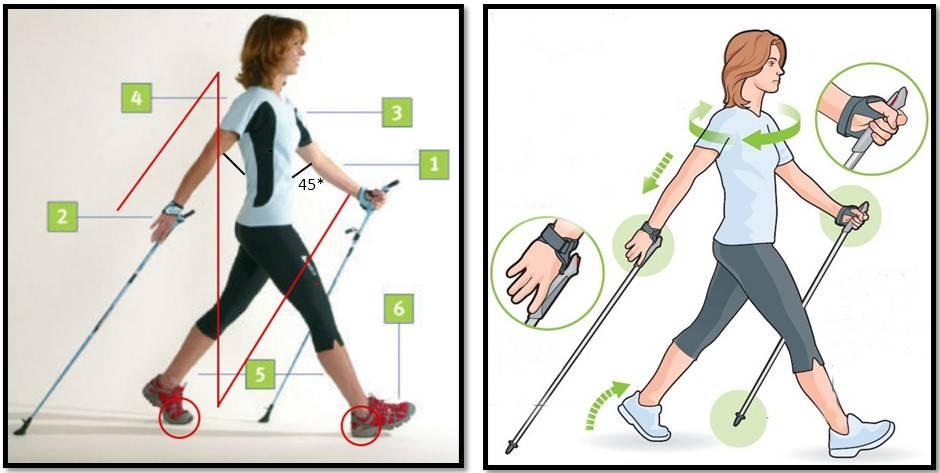 Спортивная ходьба: техника, чем отличается от бега и обычной ходьбы
