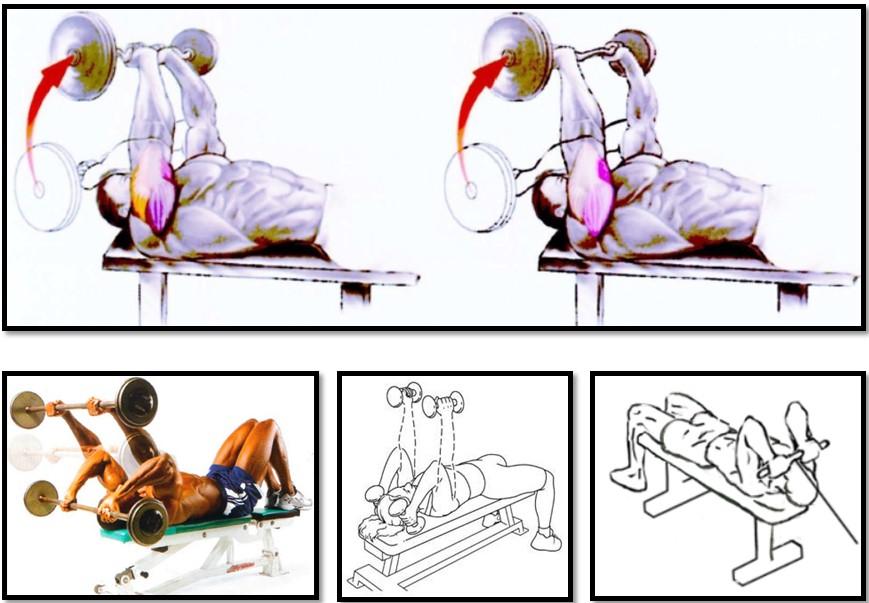 Французский жим с гантелями: вариации стоя, сидя и лежа