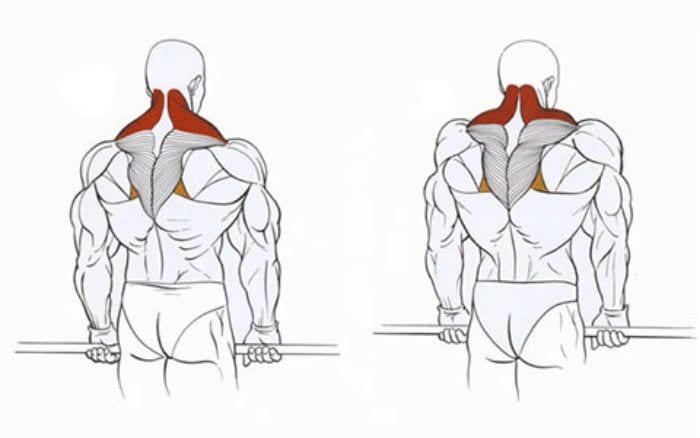 Упражнения для накачивания спины в домашних условиях: как качать мышцы