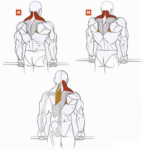 Комплекс упражнений, чтобы укрепить мышцы спины в домашних условиях | rulebody.ru — правила тела
