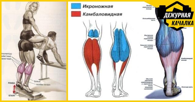 Лучшие упражнения на икры ног: для мужчин и женщин