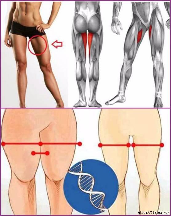 Упражнения для внутренней поверхности бедра: как накачать мышцы?