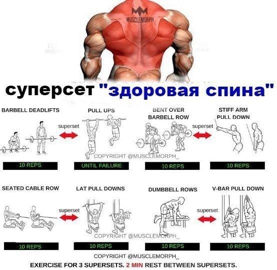 5 программ тренировок бицепса - от новичка до профессионала - dailyfit