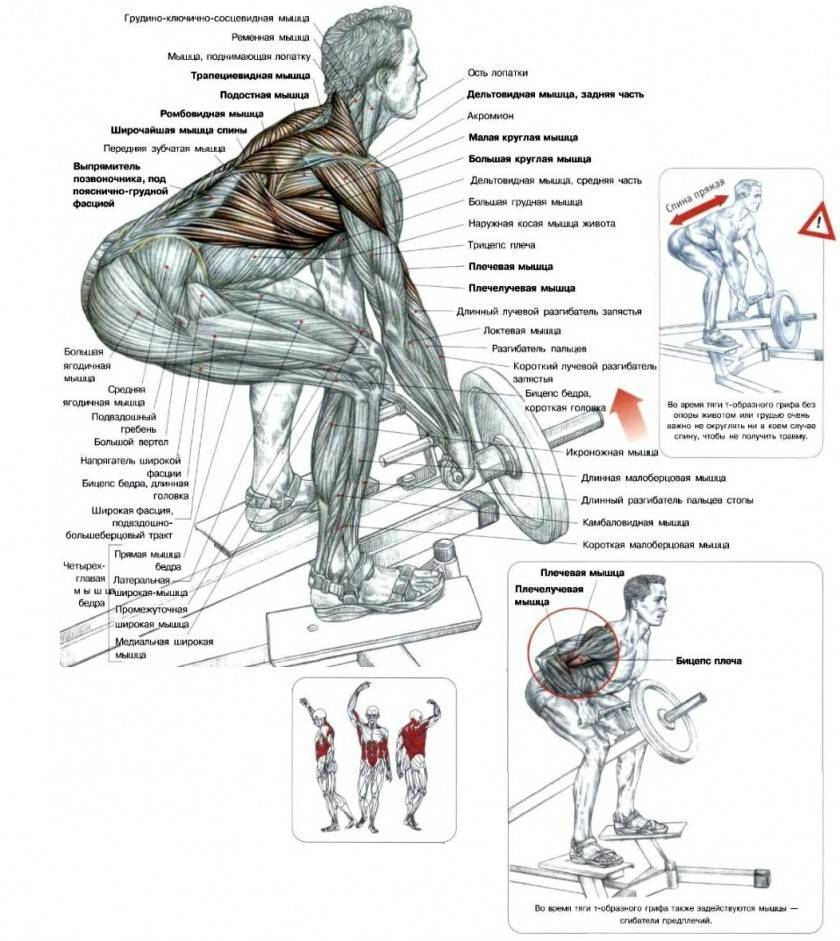 Комплекс упражнений на мышцы спины для тренажерного зала