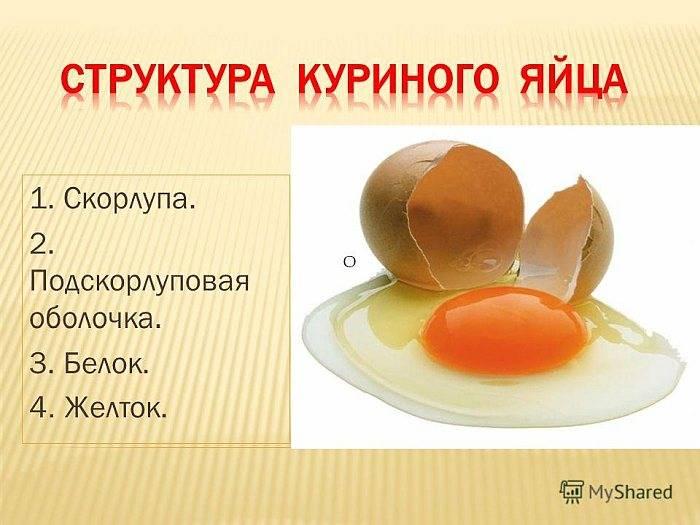 Двухжелтковые куриные яйца - почему они появляются и что с ними делать