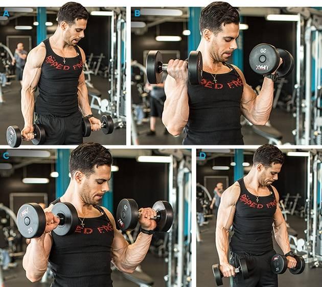 Идеальные плечи со «сгибаниями зоттмана»! сгибания зоттмана: техника и советы упражнение зоттмана или обратный подъем штанги.