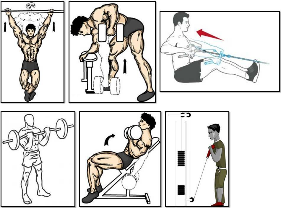Топ упражнений на бицепс с гантелями и штангой (гифки)