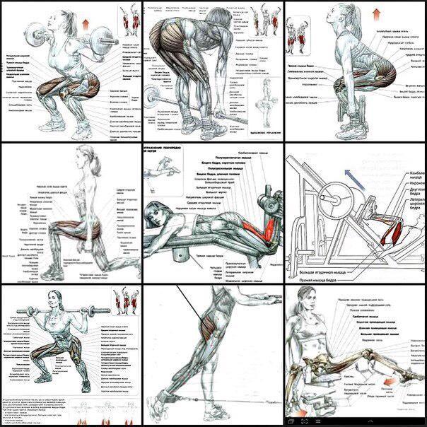 Комплексы упражнений для ног - как быстро накачать мышцы в домашних условиях мужчинам или женщинам