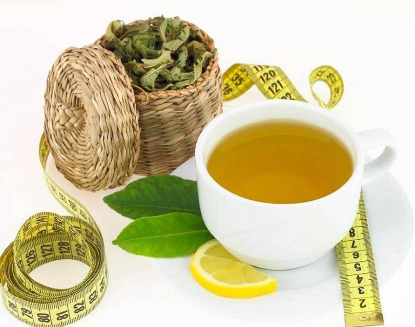 Как правильно пить зеленый чай чтобы похудеть — похудение