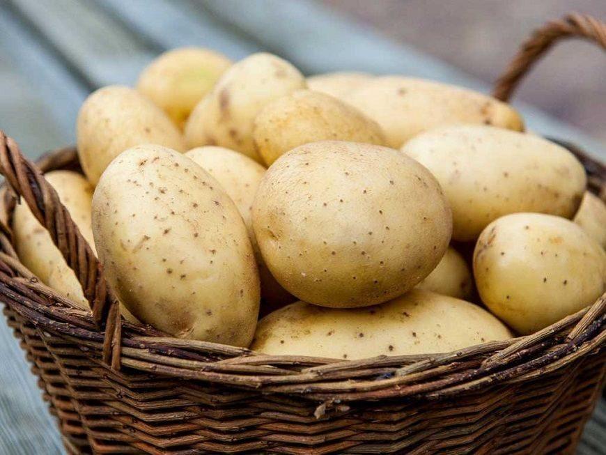 Польза и вред сырого картофеля - сайт о картофеле
