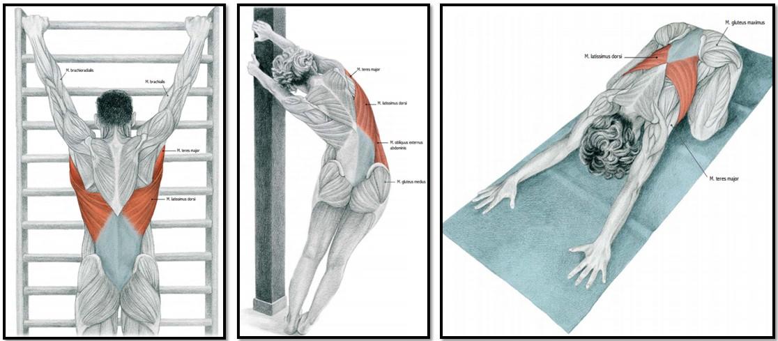 Упражнения для растягивания позвоночника помогут навсегда забыть о боли