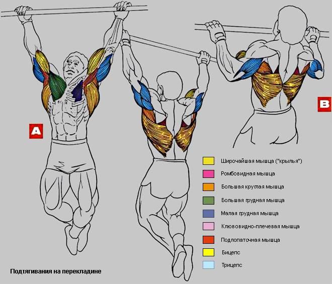 Отжимания и подтягивания для всех групп мышц и виды упражнений на турнике в домашних условиях