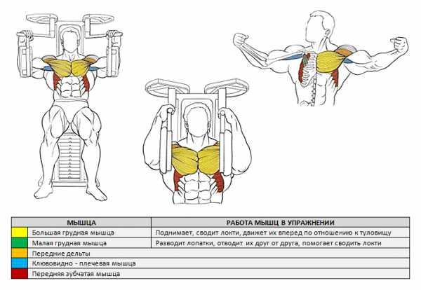 Эспандер бабочка: упражнения с тренажером тай мастер для рук, ног и других мышц для женщин