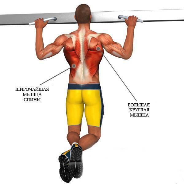 Подтягивания узким хватом — sportfito — сайт о спорте и здоровом образе жизни