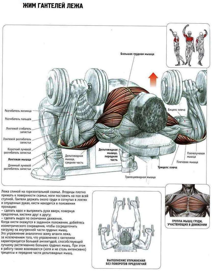 Как накачать мышцы груди?