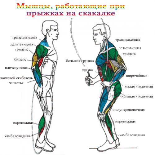 Прыжки со скакалкой: готовый план упражнений + плюсы