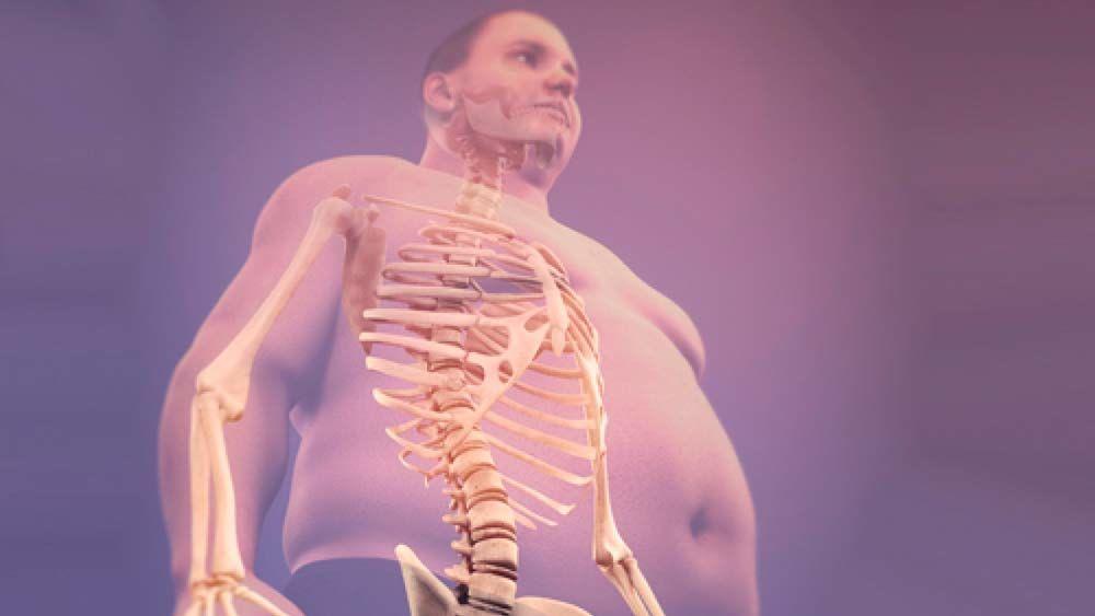 Сколько костей в теле взрослого человека