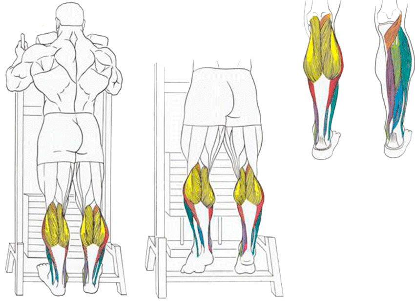 17 упражнений, которые помогут накачать ноги мужчине в домашних условиях