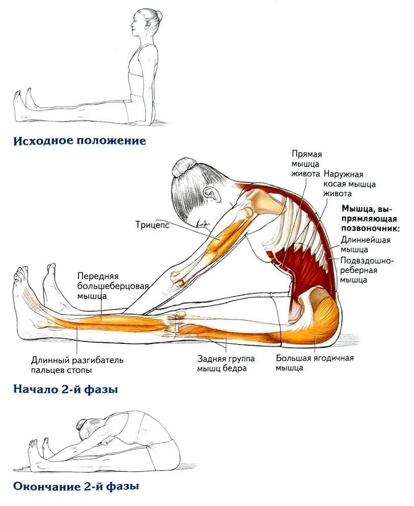Растяжка спины: упражнения, разминочные комплексы и рекомендации