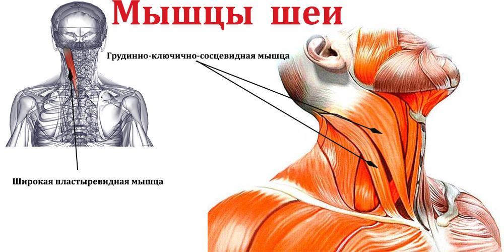 Как накачать шею в домашних условиях