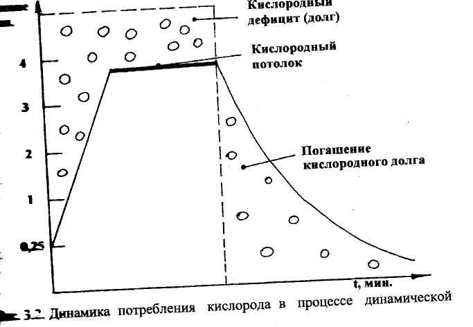 Потребление кислорода и кислородный долг