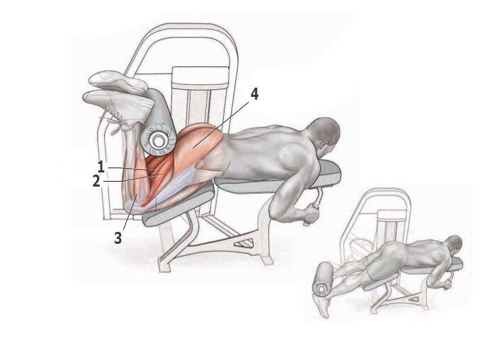 Сгибание ног лежа в тренажере: фото и видео упражнения