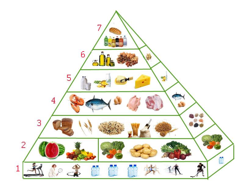Пирамида питания – что это такое