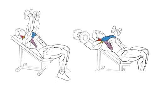 Тяга гантелей лежа на скамье: техника выполнения, какие мышцы работают