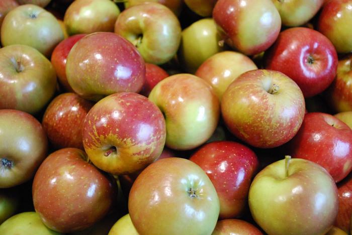 Запечённые яблоки: польза и вред для организма взрослых и детей, применение в медицине и кулинарии