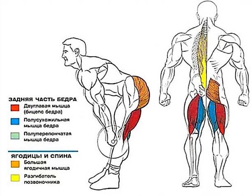 Правильные выпады с гантелями и со штангой: как делать (техника упражнения)