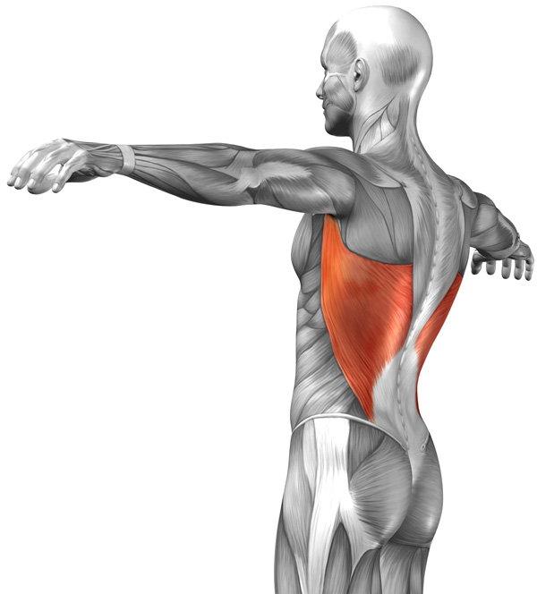 Как накачать широчайшие мышцы спины: топ 4 упражнения и вариации