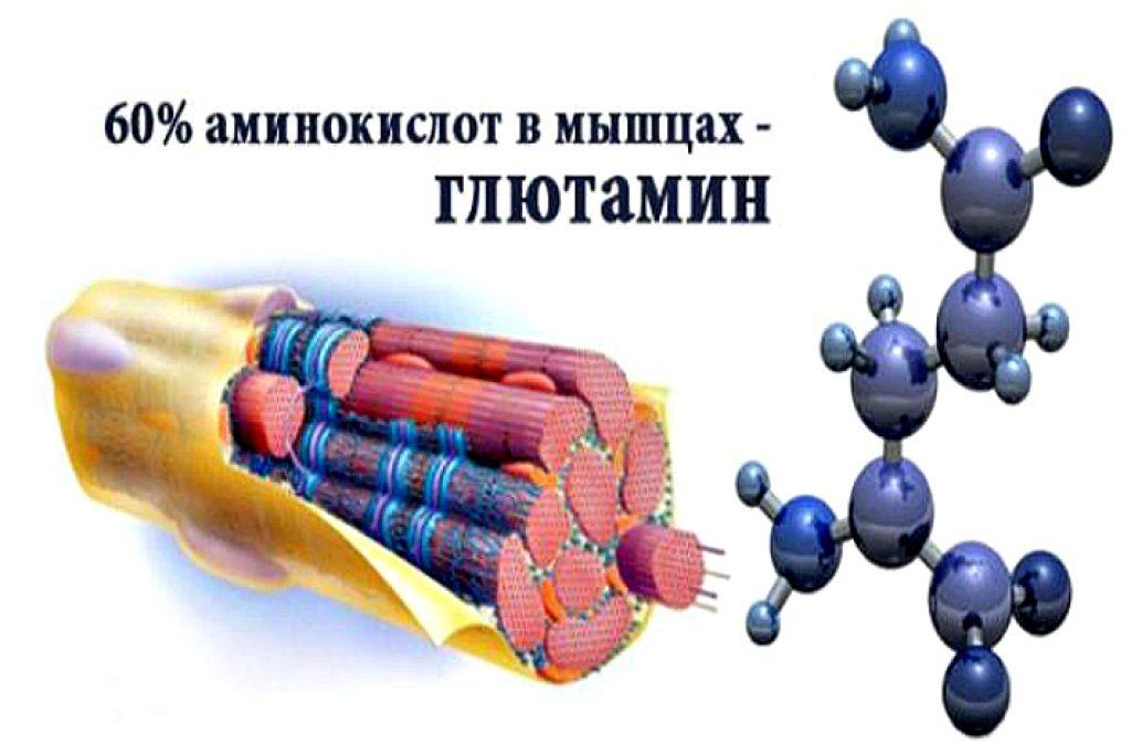 Глютамин: для чего он нужен, польза, вред и побочные эффекты