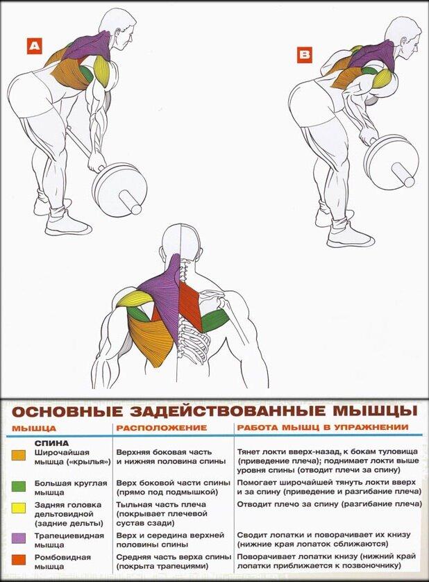 Упражнения на трапецию с собственным весом