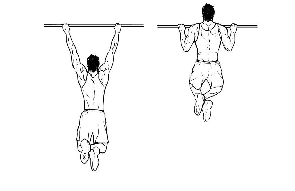 Мышцы работающие при подтягивании: группы, турник, качаются, хват