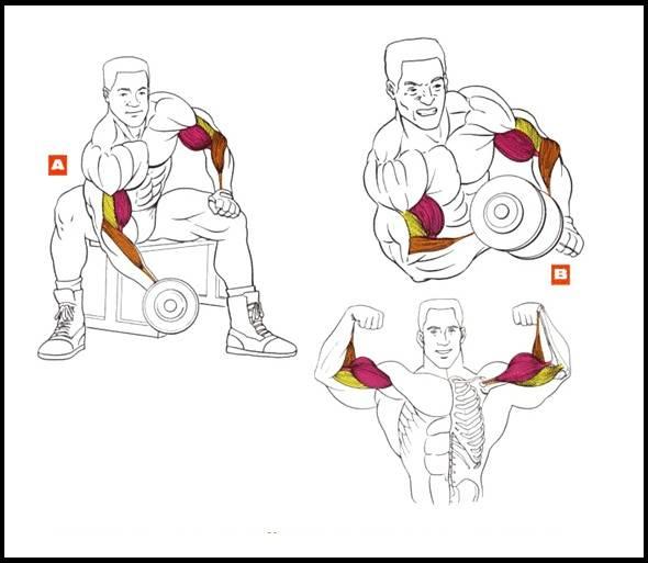 Лучшие упражнения для предплечий