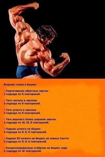 Программа арнольда шварценеггера: схема и пинципы построения тренировочного сплита, варианты тренировок арнольда