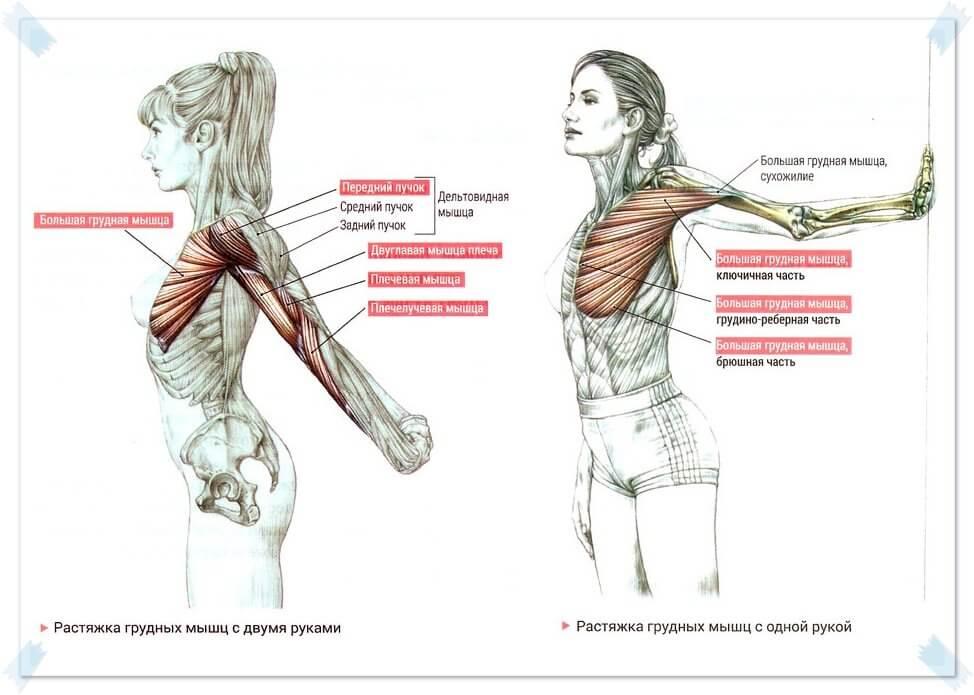 Как растянуть грудные мышцы: комплекс упражнений в домашних условиях