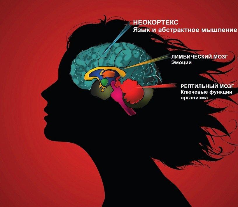 Связь «мозг-мышцы»: как тренироваться эффективно?