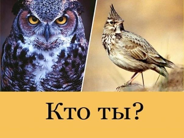 Как превратиться из совы в жаворонка