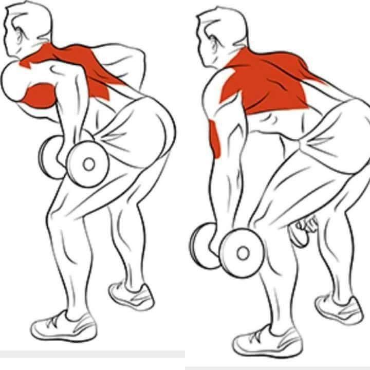 Как накачать спину гантелями: упражнения и техника их выполнения в домашних условиях и в зале